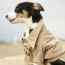 Trench trend, only for dogs!